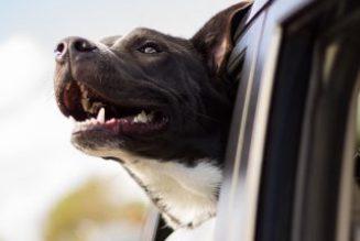 Ein Hundeleben auf der Straße
