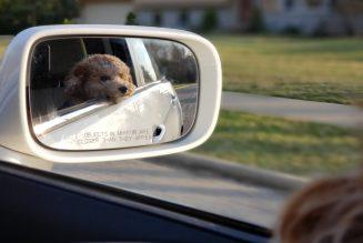 4 Gründe, warum du dein Haustier mit auf die Arbeit nehmen solltest